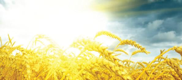 Análise ultrarrápida de solo agrícola por ICP OES