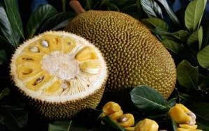 Ele possui uma partícula de ouro que é envolvida com a jacalina, retirada da semente da fruta, e a substância natural se liga aos açúcares liberados pelas células com leucemia.