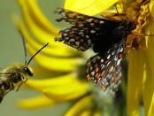 abelhas-e-borvoletas